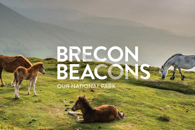 Native ponies in the Brecon Beacons