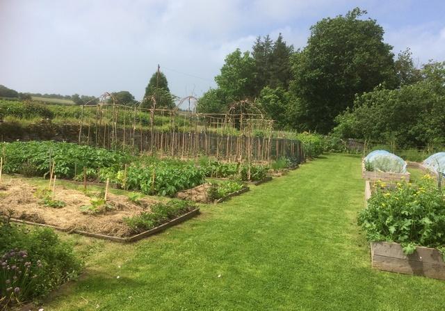 Organic garden Brecon Beacons